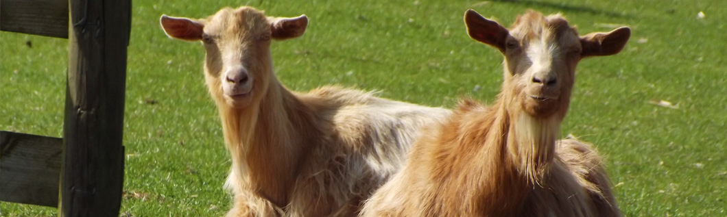 Specialising in all aspects of health and productivity in farm animal species for over 15 years